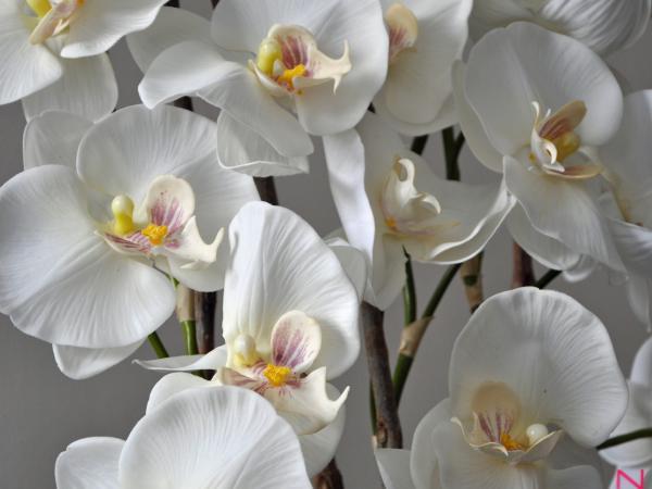bloem6.jpg