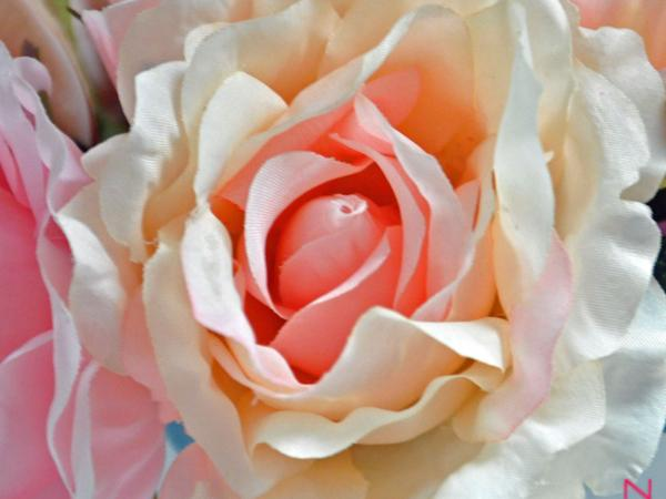 bloem8.jpg