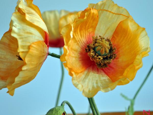 bloem7.jpg